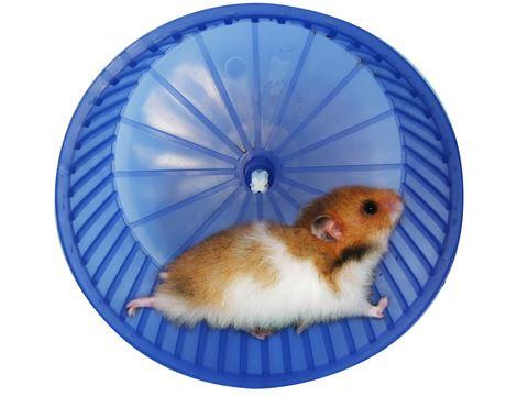 Hamster Çarkı Küçük 10*5 cm